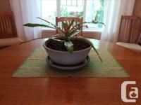 Cryptanthus are amazing plants! They need generous