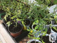 Plant Sale at our Spring Fair, Sat. May 25 from 10 am