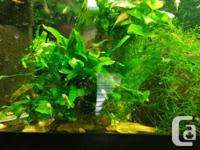 3$ Cherry shrimp 2 to 7$ various plants (not to sure
