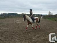 15 h Registered Paint/Pinto mare, 11 years old Good