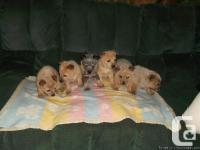 We have 6 puppies all together. There are 4 males ( 3