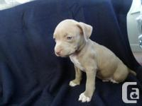 ** ONLY 2 PUPS LEFT READY TO GO ** 1 male all black