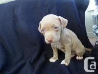 ** ONLY 3 PUPS LEFT READY TO GO ** Diamond is approx.