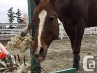 """My quarter horse mare is available for 1-2 day,"