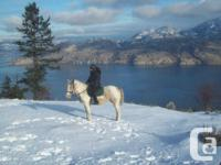 Quality horse care in Summerland. We are very