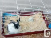 Friendly lovable youthful rabbit with cage, Set up