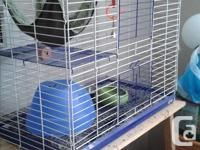 Looking for a good home for a young female chinchilla.