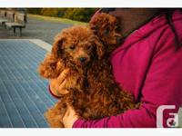 Two gorgeous dogs, hand picked and imported from the