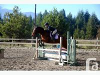 Sporty 15hh bay 10 year old Connemara mare. Loves to