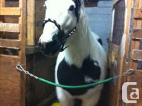 selling my mare she is registeted i am Changing