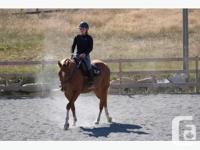 "Flashy registered 2008 AQHA quarter horse gelding ""An"