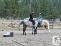 Riding/horsemanship lessons from beginners to