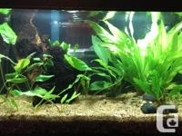 Rimless 10 gallon and stand. Comes with the canopy