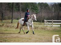 ffered for sale, broodmare, western barrel horse,