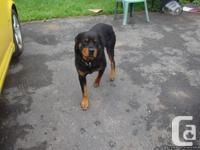 I have a 3 year old Rotty for sale, his name is Damien,