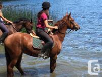 Scarlett is a lovely 14.1hh 4yr old Qh X mare, she has