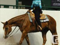 SEASONED AQHA SHOW HORSE FOR SALE!!! BIG GENTLE PRETTY
