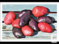 We have quality Seed Potatoes ready for your spring