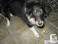 One little female pup looking for a home. She is very