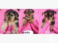 1 female 1male very nice puppy ready to go home raise