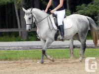 Epona shows outstanding dressage prospect. She has
