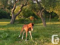 Star Gazer Farm currently have room to board 1-2 horses