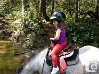super cute 10 yr grey reg welsh pony sadly for sale. My