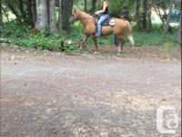 Nor'west Equestrian has a couple horses available for