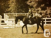 $2500 obo! 15.3hh gelding, has done natural