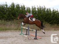 I have a super cute just turned 4 TB Gelding for sale,