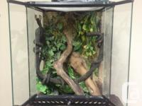 Exo Terrarium in excellent disorder with locking front