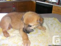 We have two gorgeous, playful terrier/pomeranian for