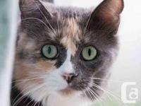 Bess is attractive, inside and also out! - Shy Feline -