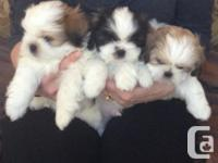 Puppies  looking for new homes,  new friends and