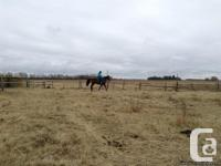4 year old retired Thoroughbred looking for a new