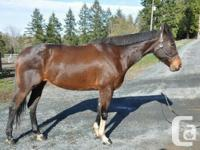 Kanses is a beautiful registered Thoroughbred x Paint for sale  British Columbia