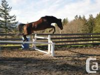 Kanses is a beautiful registered Thoroughbred x Paint