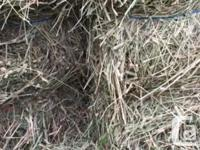 Small square bales of Timothy hay for sale. Cut early