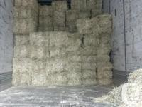Alberta Timothy Alfalfa-Orchard Grass Mix hay in the