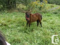 Gorgeous little colt available in Sept.very reasonably
