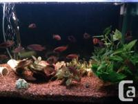 I need to find a new home for my African Cichlids and