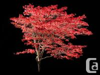 Do you have a gorgeous tree in your yard, or maybe a