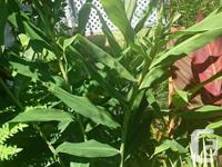 I have a variety of tropical plants for sale. Red