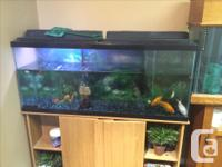 The two tanks and oak stands are 200$ each. They both