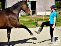 Would you love to build a better bond with your horse?