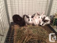 2 male bunnies searching for brand-new residence. They