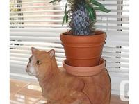 As shown. Put your favorite plant on kitty's back! Use