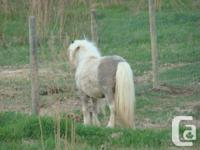 Beautiful long mane and tail . fairly well behaved ,