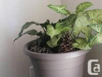 Aloe, snakes tongue, lemon tree, prayer plant and one