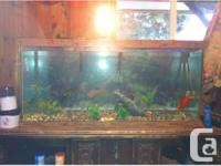 We have a 90 gallon tank and are looking to give a home
